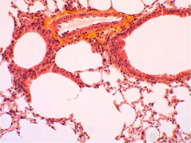 allergologie (2)