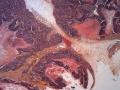 angiogénèse 02 V07-283