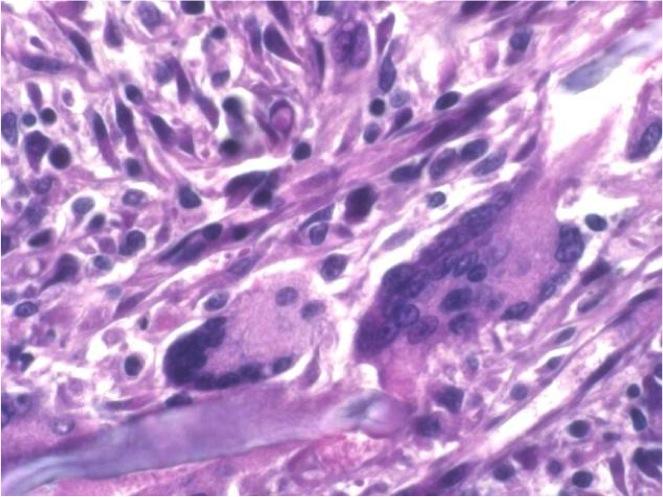 dermato (3)
