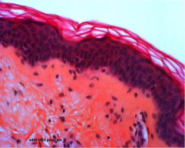 dermato (4)